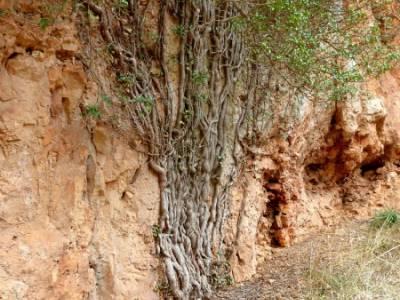 Hoces y cañones del Río Piedra y del Río Gallo -- Laguna Gallocanta - Trekking and hiking;rutas p